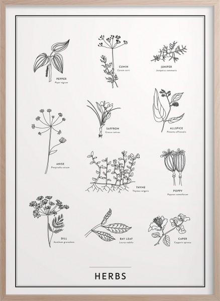 Kunskapstavlan, Poster, Kryddväxter - 30x40cm